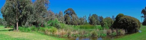 A created wetland with native vegetation in Oakleigh's Talbot Park